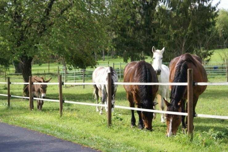 O cavalo é um animal muito sociável, não gosta de ficar isolado. Por isso, toda propriedade precisa de uma área suficiente com cerca para piquetes