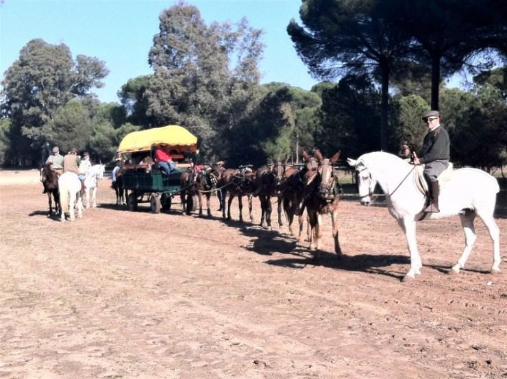 As Tradições Equestres mostram as fascinantes histórias que existem pos trás da cavalgada. Hoje destaco dois eventos tradicionais na Espanha