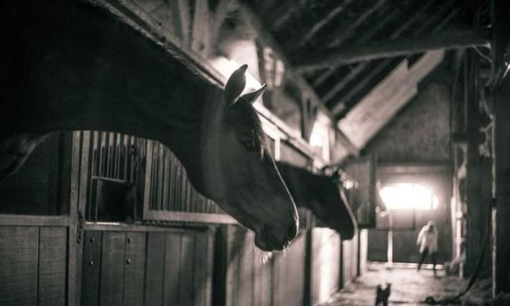 Não deixe que a chuva atrapalhe você de ir para ao pavilhão de baias; reúna os amigos e fique perto dos cavalos com essas dicas