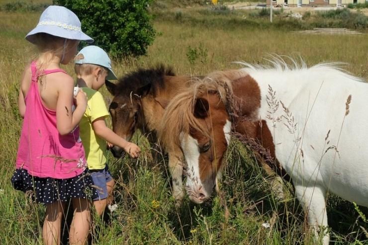 A gente faz de tudo para agradar uma criança e encontrar a raça de cavalos perfeita entra nessa lista é uma dessas coisas que fazemos