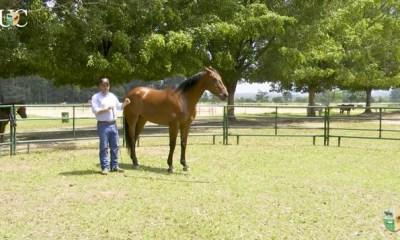 Exercícios de chão para doma de cavalos
