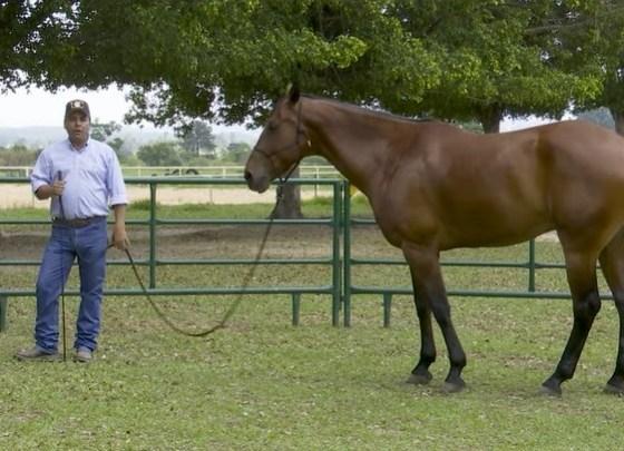 O Mensagem a Cavalo da TV UC é uma troca de experiência com você sobre o passo a passo da doma e o trabalho de chão para construir o cavalo