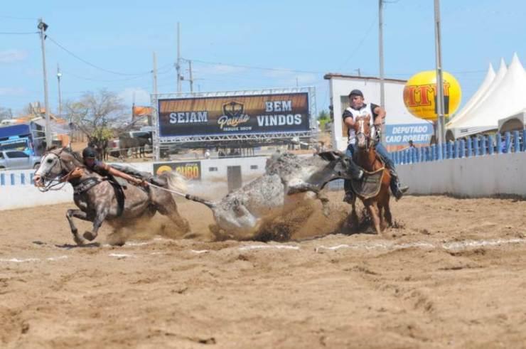 Sem apresentar boa saúde e bom condicionamento físico, os cavalos – como os de Vaquejada - não conseguem atender às necessidades