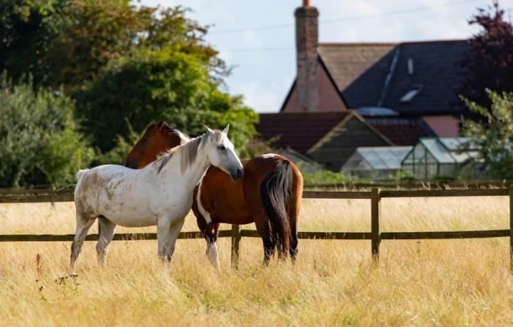Nutrição equina está diretamente ligada ao bem-estar animal. A nutrição adequada, sobretudo, favorece desempenho do cavalo atleta