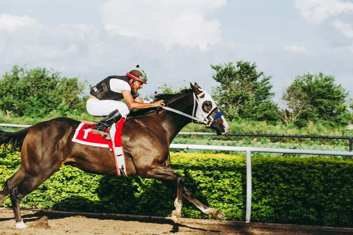 Vitamina C é um antioxidante para cavalos atletas