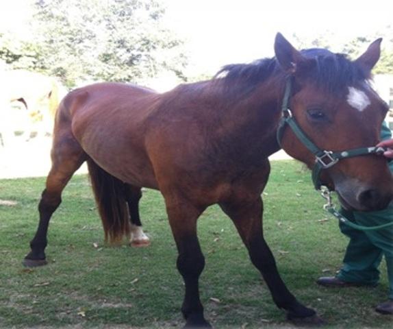 Devido à sua elevada taxa de mortalidade, o tétano em equinos também é perigoso por conta do período de convalescença ser longo
