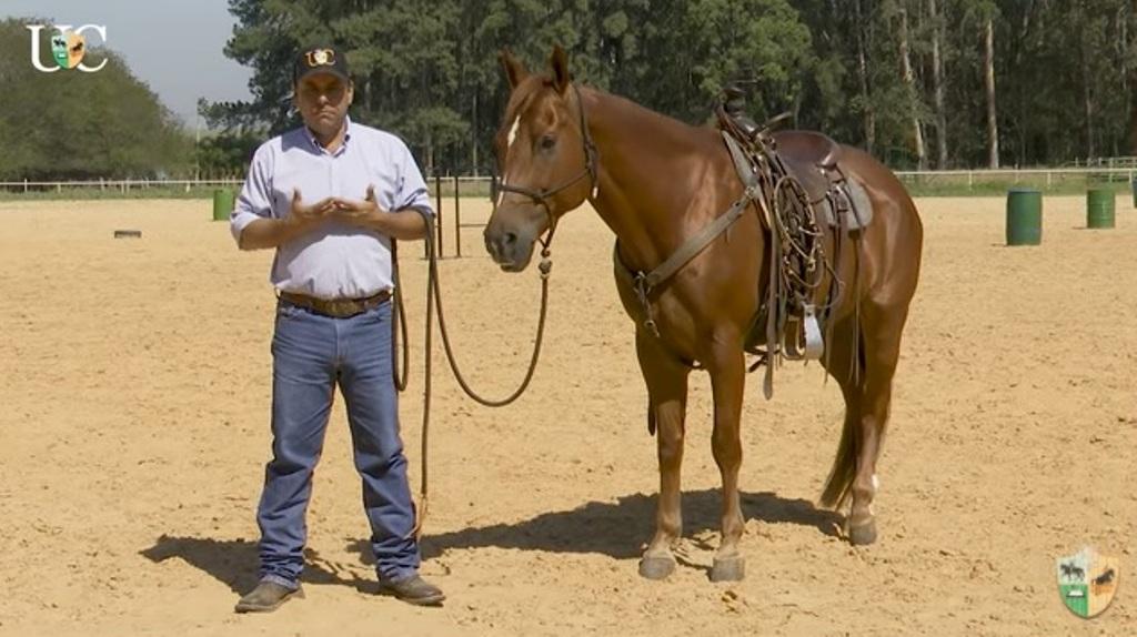 TV UC – Um novo cavalo para treinar, o que faço na primeira sessão?