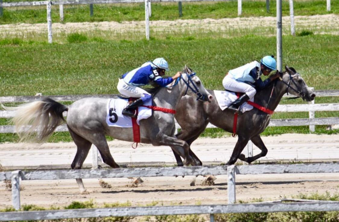 Cavalo Árabe abre temporada 2021 de Corridas no JCSP
