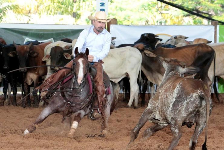 Super premiada, Fazenda Gruta Azul é referência no mundo do cavalo e da modalidade Apartação; esta sempre nos pódios ganhando prêmios