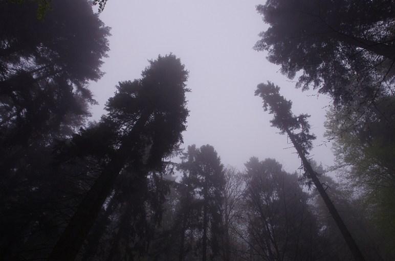 Les na Čergove