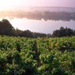 Vins de Loire Cave Le Petit Grain Rieumes