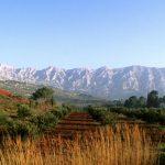 Vins de Provence Cave Le Petit grain Rieumes