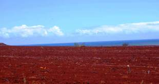 Red Soil | Types of Soil
