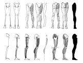 blocagem anatomia 04