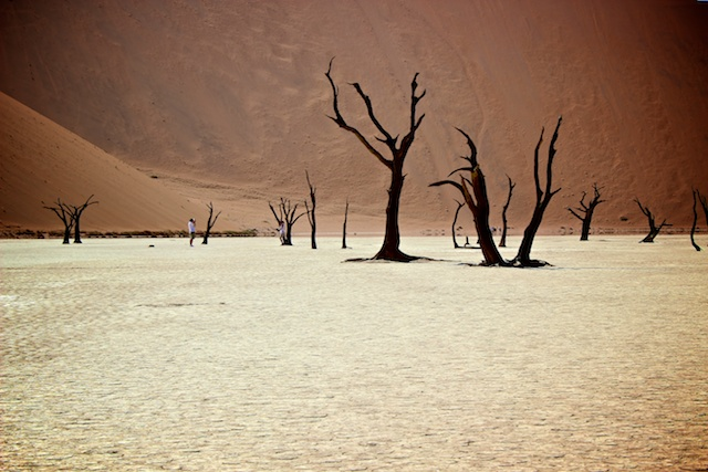 Deadvlei in the Namib desert, Namibia