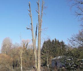 Élagage de 3 chênes et abattage de 3 autres | Coulommiers