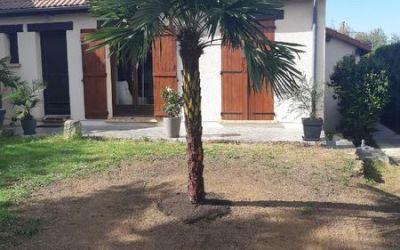 Abattage et dessouchement d'un conifère et plantation d'un palmier | Tournan en Brie 77