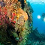 Cayman's reef threat goes global
