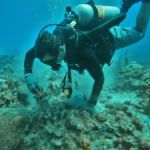Allen and DoE complete joint coral restoration plan