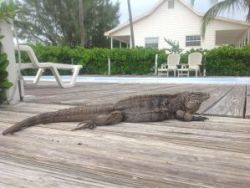 Cayman News Service, Little Cayman