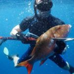NCC battles conflict over spearfishing
