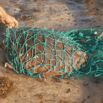 Turtle found tangled in line and net