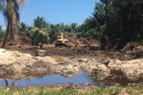 Widespread-clearing-of-mangroves-is-causing-environmental-concerns.jpg?w=600&ssl=1