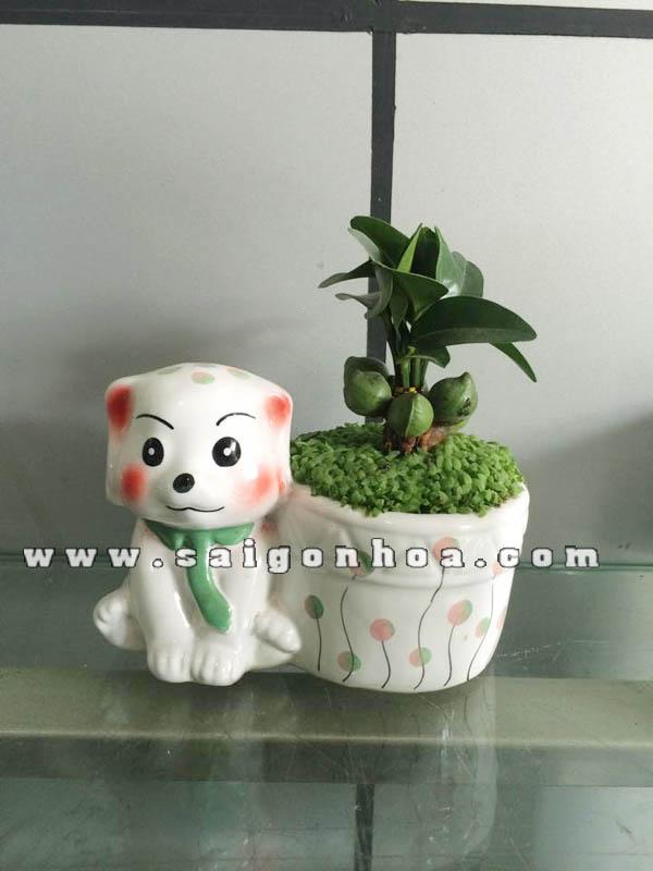 Cây May Mắn Tài Lộc Chậu Cún Con | Sài Gòn Hoa