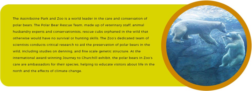Polar-Bear-Conservation
