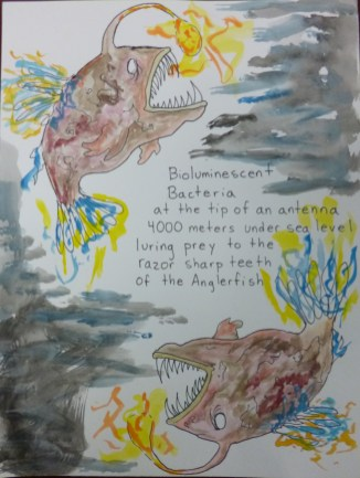 Bioluminescent Bacteria, th grade, 3rd Place