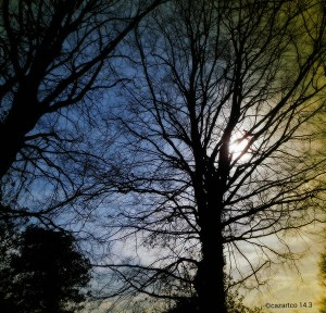 Through The Trees by Cazartco