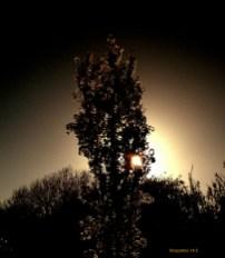 The Cherry Tree by Cazartco