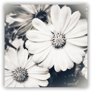 Those Daisy Days by cazartco