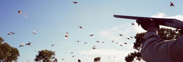 Partridge hunting