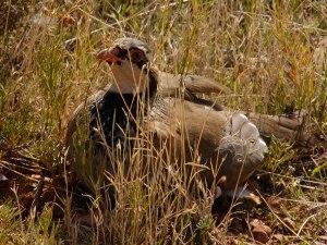 images_wonke_actualidad_medio-ambiente_20120419-Perdiz