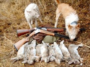 images_wonke_actualidad_federaciones_20120621-conejosypodenco