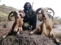 Un día de caza tras los arruis en Sierra Espuña