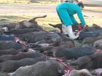 El Transporte de la carne de caza