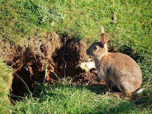 images_wonke_actualidad_nacional_octubre_2013_20131004_conejo