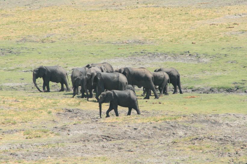 elefantes sci