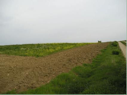 cultivo adecana