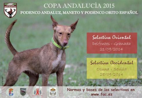 Copa_Andalucia_Podenco_Andaluz-1