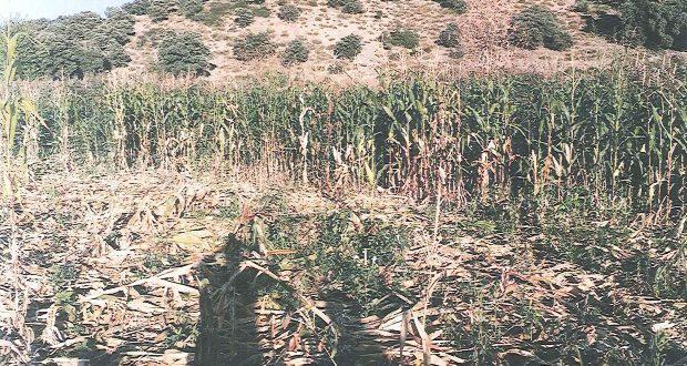 daños-agricultura