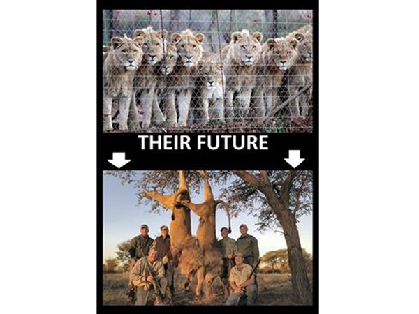 Foto: CAMPAING AGAINST CANNED HUNTING