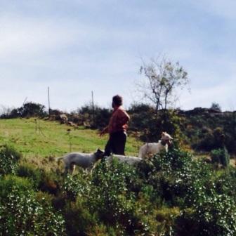 colorao montería valdespino