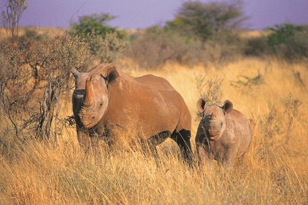 Africa rinocerontes