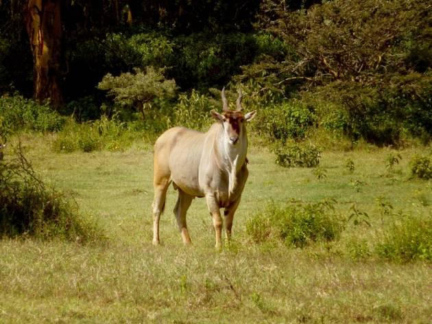 358 - Antilopes (5)
