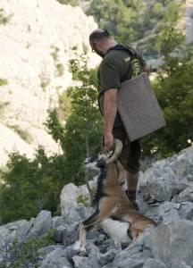 359 - Muflones Libres En Croacia (5)
