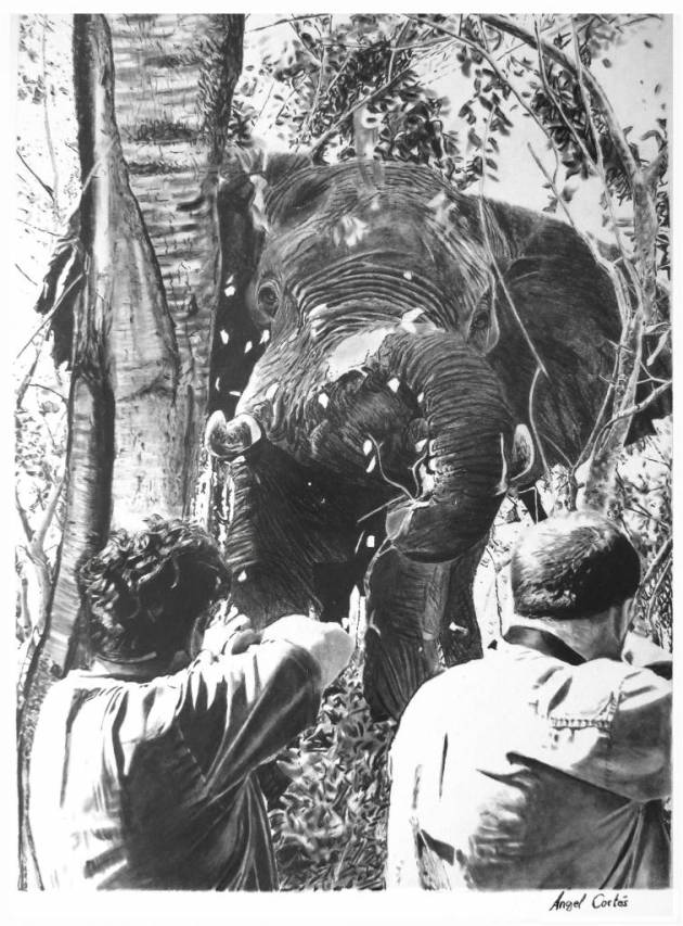elefante dibujo ángel cortés
