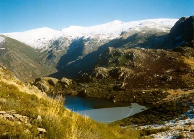 360 - Cabra montes en Galicia
